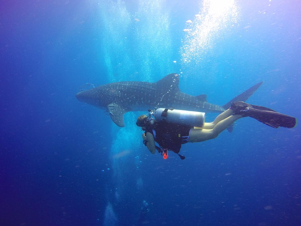Chloe dives with whale shark