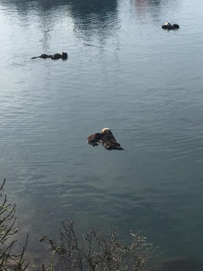 Sea Otters